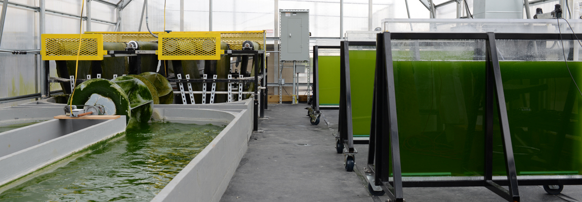 Inside the Algal Production Facility showing different pieces of equipment.