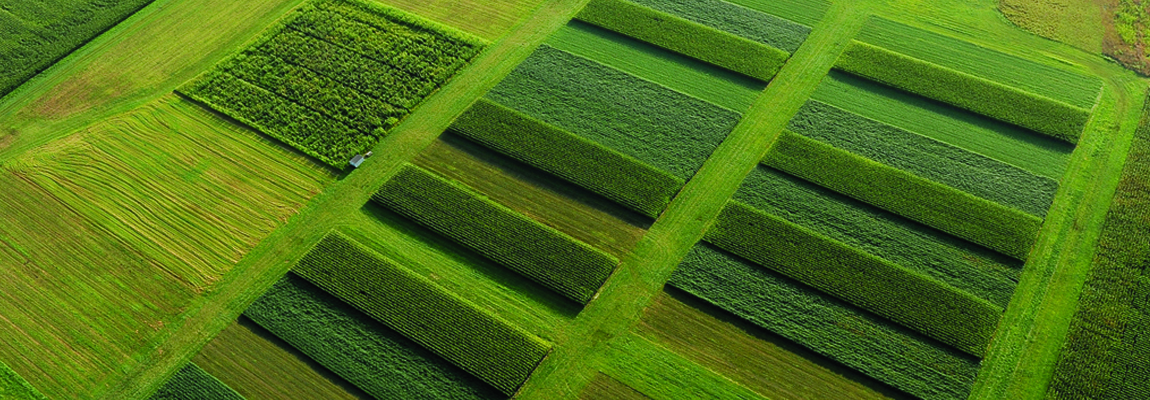 Aerial view of research plots used for biomass production.
